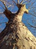 Träd i perspektiv Arkivfoton