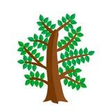 Träd i plan stil också vektor för coreldrawillustration Royaltyfria Bilder
