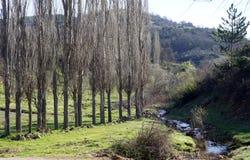 Träd i rad och flod Royaltyfri Foto