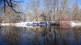 Träd i reflexion Arkivfoton