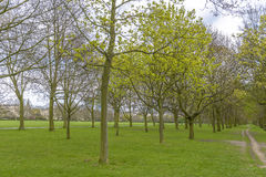 Träd i Regent's Park, London Arkivfoton