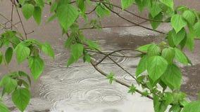 Träd i regnigt väder stock video