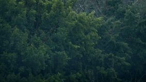 Träd i regnstorm och vind lager videofilmer