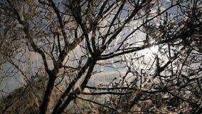 Träd i rengöringsduken arkivfilmer