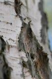 Träd i rengöringsduken Royaltyfria Bilder