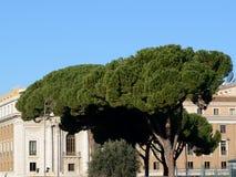 Träd i Rome royaltyfri bild
