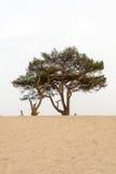 Träd i sanden Royaltyfri Fotografi
