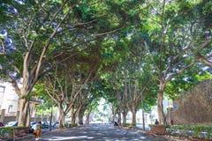 Träd i Santa Cruz Arkivfoton