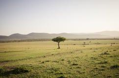Träd i savannet Royaltyfria Foton