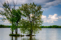 Träd i sjön royaltyfria foton