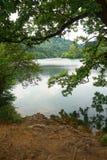 Träd i sjön i berget royaltyfria bilder