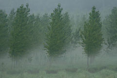 Träd i skog fotografering för bildbyråer