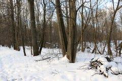 Träd i skogans-snö omkring Arkivfoto