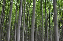 Träd i skogen Royaltyfri Fotografi
