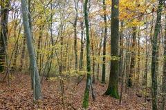 Träd i skogen i höst Arkivbilder