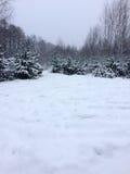 Träd i skogen under snön övervintrar Naturlig härlig bakgrund med frostade träd i vinter Arkivfoto