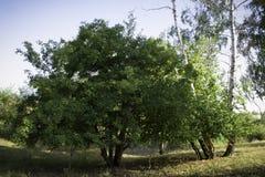 Träd i skuggan Arkivbilder