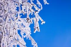 Träd i snö arkivfoton
