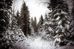 Träd i snö Royaltyfri Fotografi
