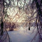 Träd i snö, Kolomenskoe, Moskva, Ryssland Fotografering för Bildbyråer