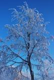 Träd i snö mot himlen Arkivfoto