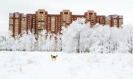 Träd i snö och hund nära inhyser på vinterdag Arkivbild