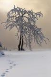 Träd i snödimmaberg Royaltyfri Fotografi