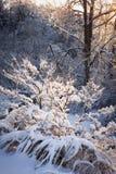 Träd i snöig skog efter vinterstorm Arkivfoto