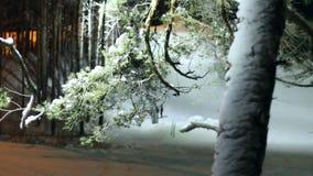 Träd i snön stock video