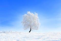 Träd i snön på en fältvinter Royaltyfri Bild