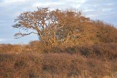 Träd i sol Arkivbilder