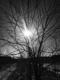 Träd i sol fotografering för bildbyråer