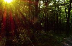 Träd i solen Fotografering för Bildbyråer