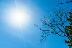 Träd i solen på en blå himmel Arkivbilder