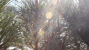 Träd i solig dag stock video
