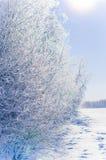 Träd i solig dag för frost Fotografering för Bildbyråer