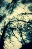 Träd i solljus Royaltyfria Foton