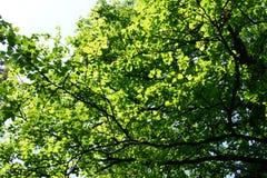 Träd i solljuset Arkivfoto