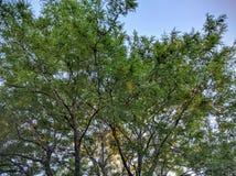 Träd i solnedgång Arkivfoto