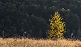 Träd i solnedgångljus Royaltyfria Bilder