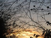 träd i soluppgångar arkivbild