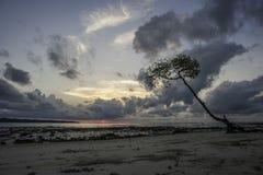 Träd i soluppgången Fotografering för Bildbyråer