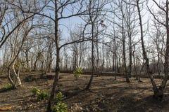 Träd i sommar Arkivfoton