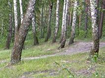 Träd i sommarskogen Arkivbild