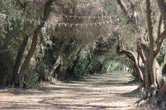 Träd i sommartiden Arkivfoto