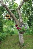 Träd i sommarträdgården Arkivbilder
