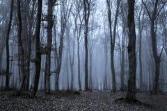 Träd i spöklik skog för blå mist Royaltyfri Fotografi