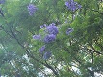 Träd i Sri Lanka Royaltyfri Bild