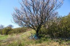 Träd i stäppen Royaltyfri Bild