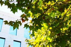 Träd i stad Arkivbild